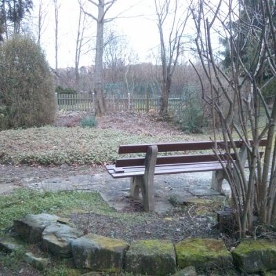 Parkbank mit Blick auf den Gingobaum
