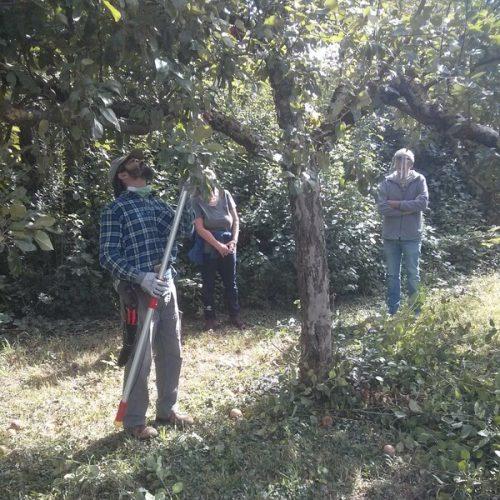 Bei zu vielen Neutrieben, ist es einfacher mit einer Teleskopschere die Bäume zu schneiden, als eine Leiter in den Baum zu stellen.